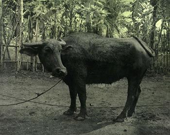 Ingar-Krauss.-Sanstitre-Davao-2007-4