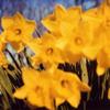 Fleurs_vives_fleurs_mortescatherine